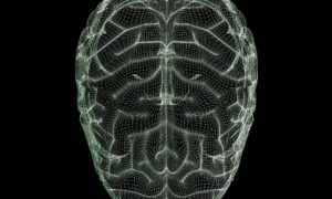 Human-brain-wireframe-014