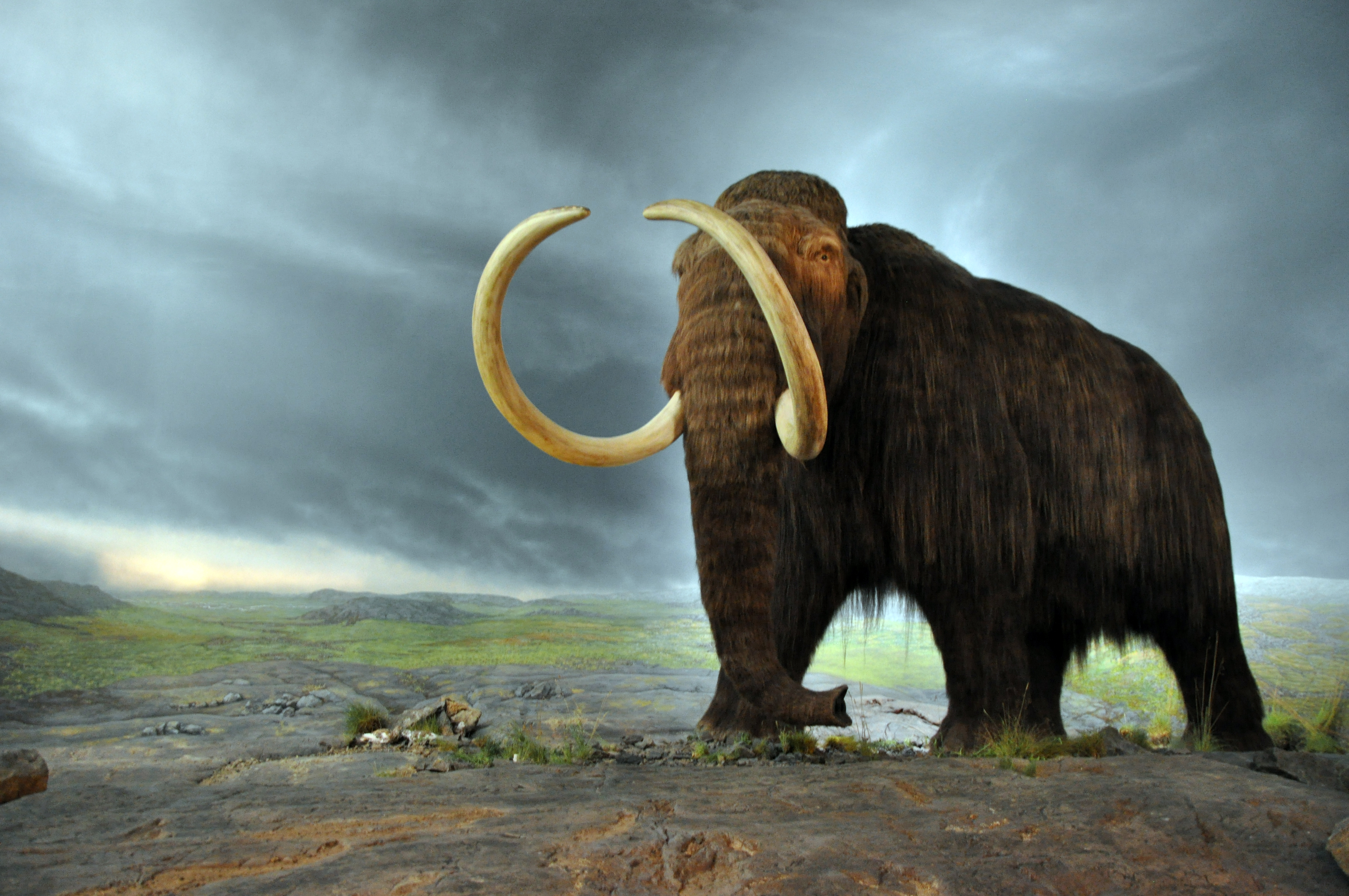 woolly_mammoth