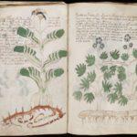 Рукопись Войнича: как ученые делают сенсации из ничего