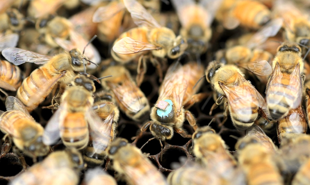 bees0