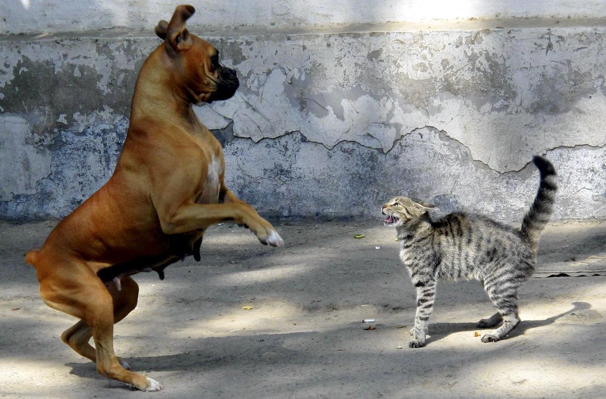 fight0